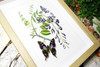 Botanical Graphium weiskei