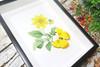 Botanical Phoebis philea
