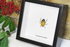 Catacanthus incarnatus Man Faced stink bug