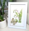 Botanical Salamis parhassus