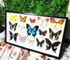 butterfly portrait collection