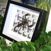 Scorpion Chernesonesometrus fulvipes
