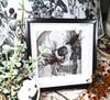 Cave spider + Whip scorpion Hypoctonus rangunensis + Kala cemeti