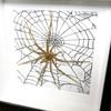 Rhytimna spider