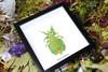 leaf insect bug taxidermy interiors Phyllium pulchrifolium bitsandbugs