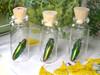 Real Metallic green beetle in bottle