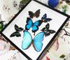 Butterfly blue combo