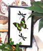Papilio palinurus + Calopteryx virgo