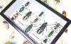 Jewel beetles Bits & Bugs