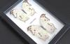 Salamis parhassus Bits & Bugs
