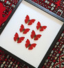 red butterflies