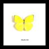 Framed butterflies Phoebis trite Bits&Bugs