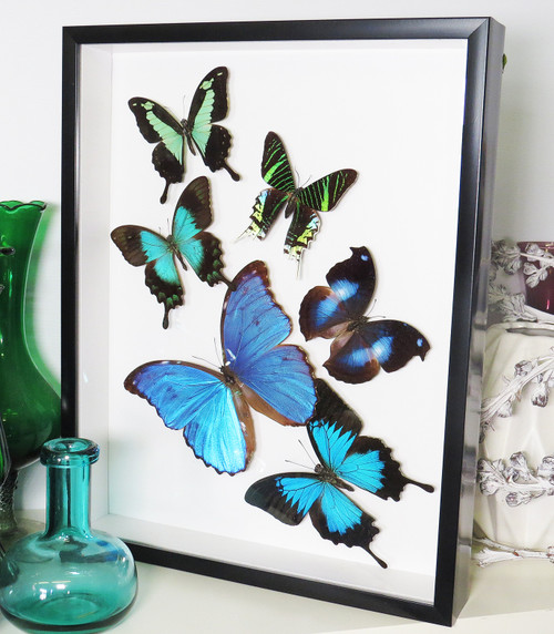 Butterfly Blue/green  sweep