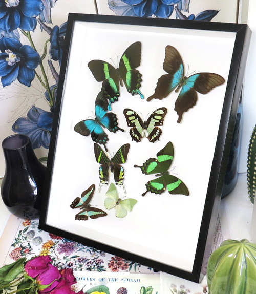 Butterfly Green sweep