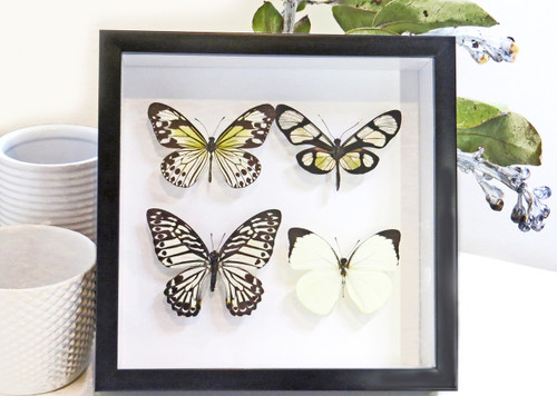 BUGS AND BUTTERFLIES - FRAMED INSECT TAXIDERMY