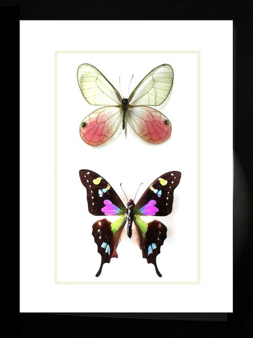 Pink Purple butterflies Bits & Bugs