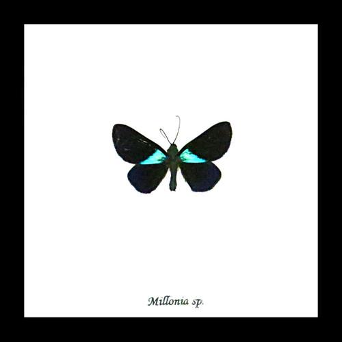 Moth framed Bits & Bugs