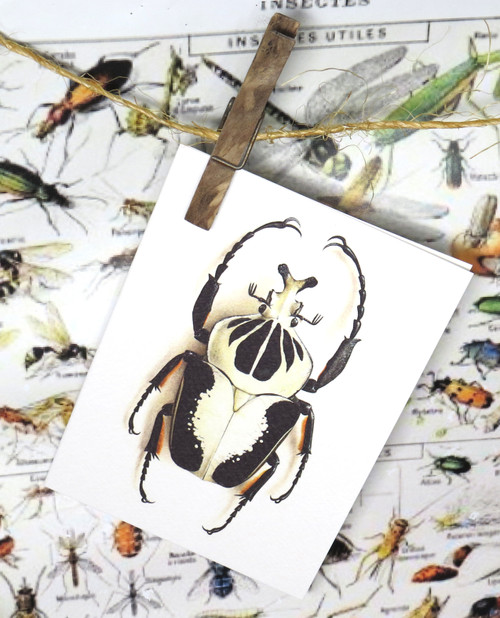 insect bug  bees entomology taxidermy for sale Bits and Bugs