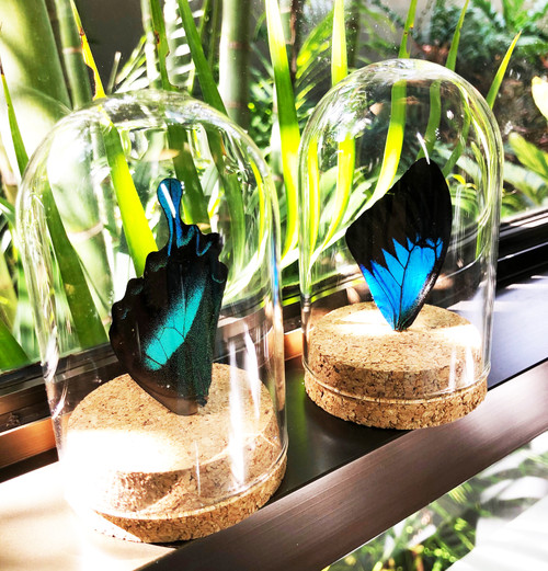Real butterfly wings