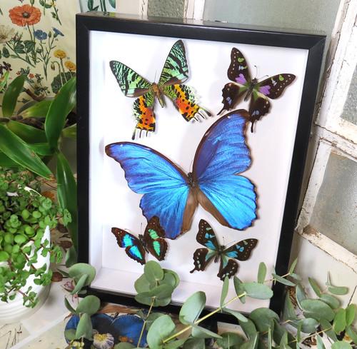 Butterfly 5 asstd