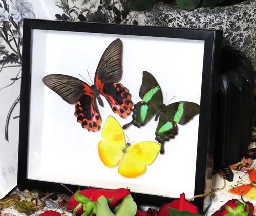 Butterfly 3 rainbow asstd