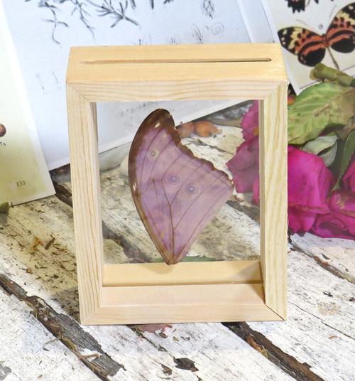 Double sided frame Morpho wing
