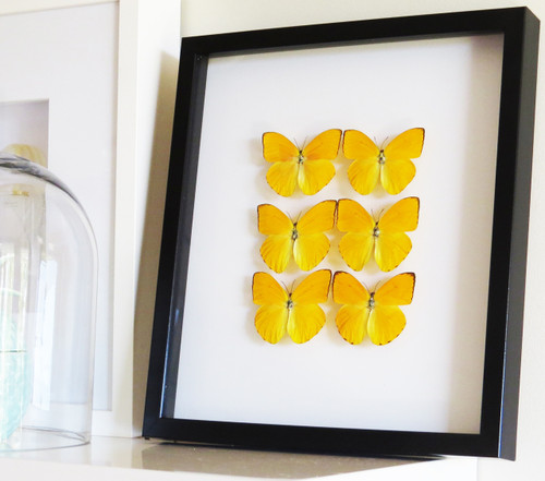 Yellow butterfly combo x 6