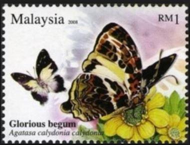 baaca-agatasa-calydonia-stamp.jpg