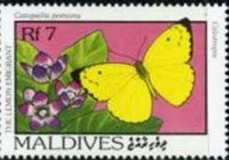 bacps-catopsilia-pomona-summer-form-stamp.jpg