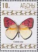 baczo-colotis-zoe-stamp.-2.jpg