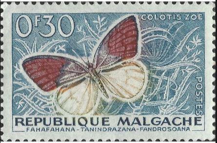 baczo-colotis-zoe-stamp.jpg