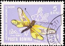 balma-stamp.jpg
