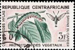 bbch-cephonodes-hylas-stamp.jpg