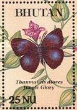 bbtdi-thaumantis-diores-stamp.jpg