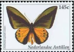 bjogs-stamp-ornthoptera-goliath-samson.jpg