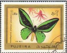 bjopp-ornithoptera-priamus-poseidon-stamp.jpg