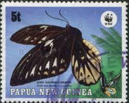 bjoppf-ornithoptera-priamus-poseidon-female-stamp.jpg
