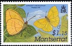 Image result for Phoebis trite stamp