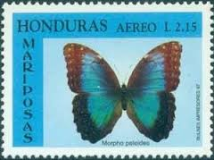 Image result for Morpho peleides stamp