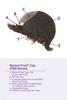 Estee Synthetic Monotop Wig by Louis Ferre