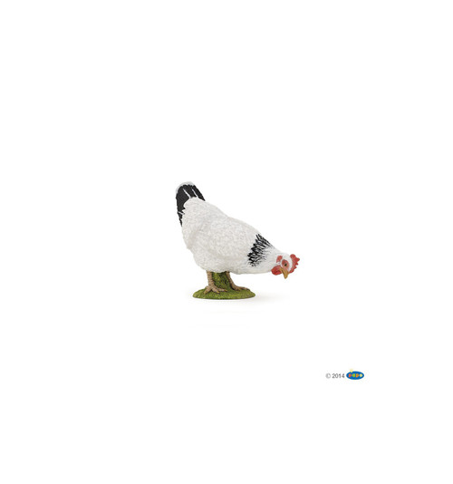 Pecking White Hen