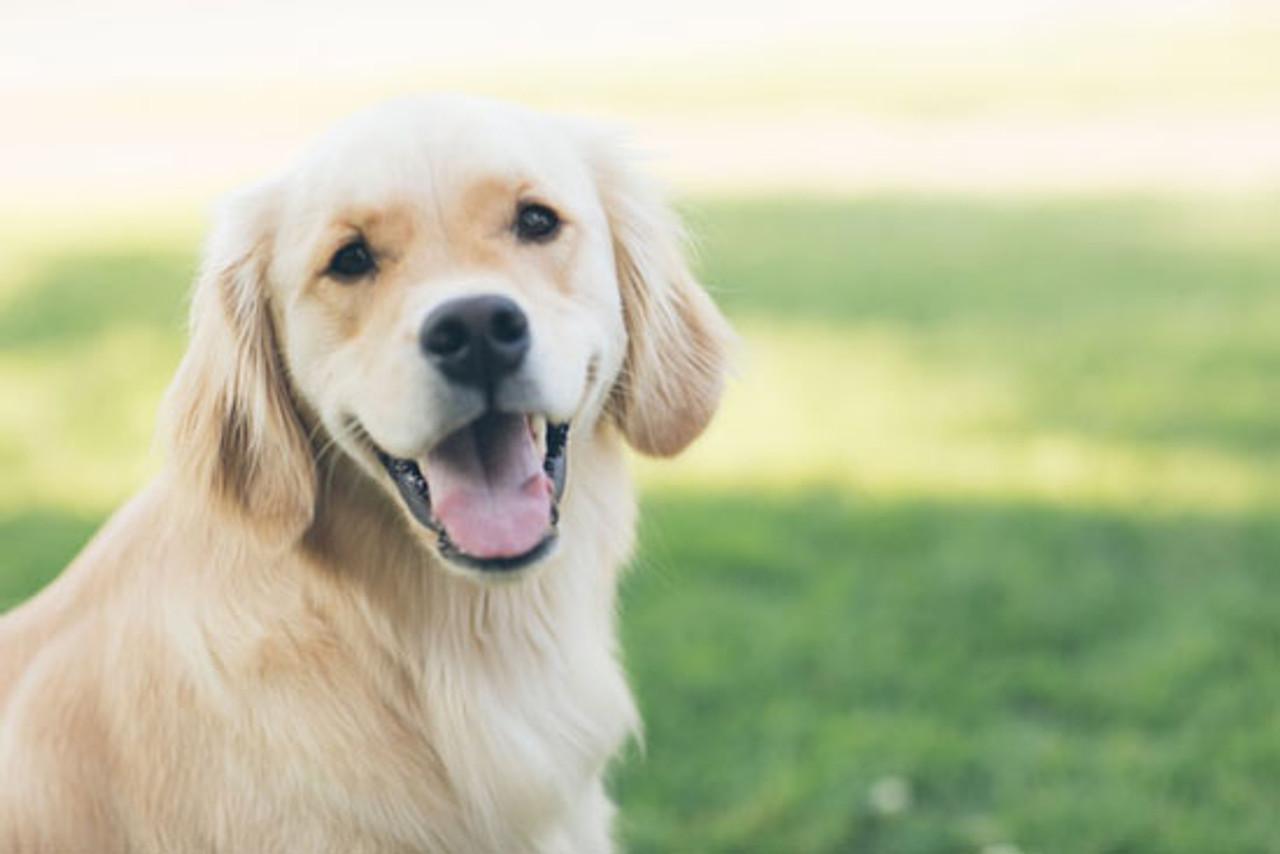 Is Feeding Dogs Coconut Oil Okay?