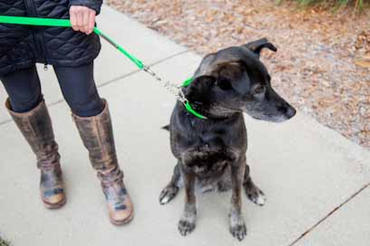 4 Reasons to Use a Martingale Collar