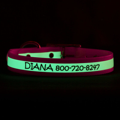 Glow in the Dark Engraved Waterproof Dog Collar Glowing in Dark