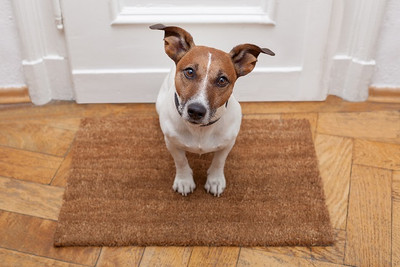 How to Keep Your Dog Calm When Guests Arrive