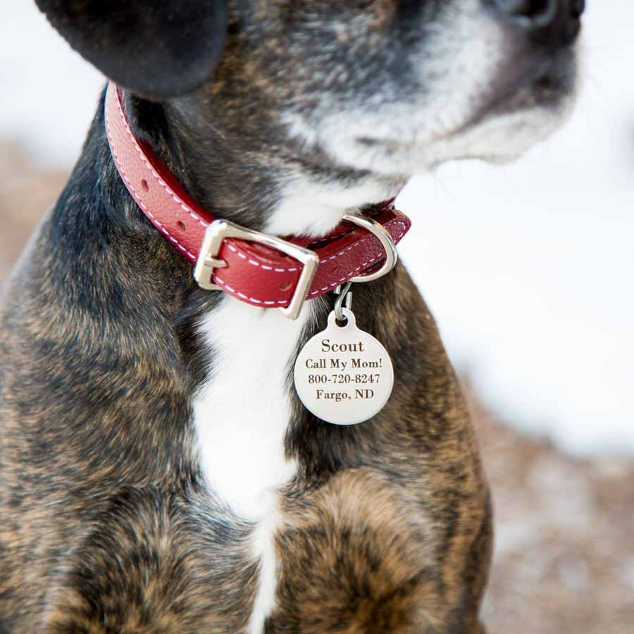 Round Dog ID Tags - On Dog