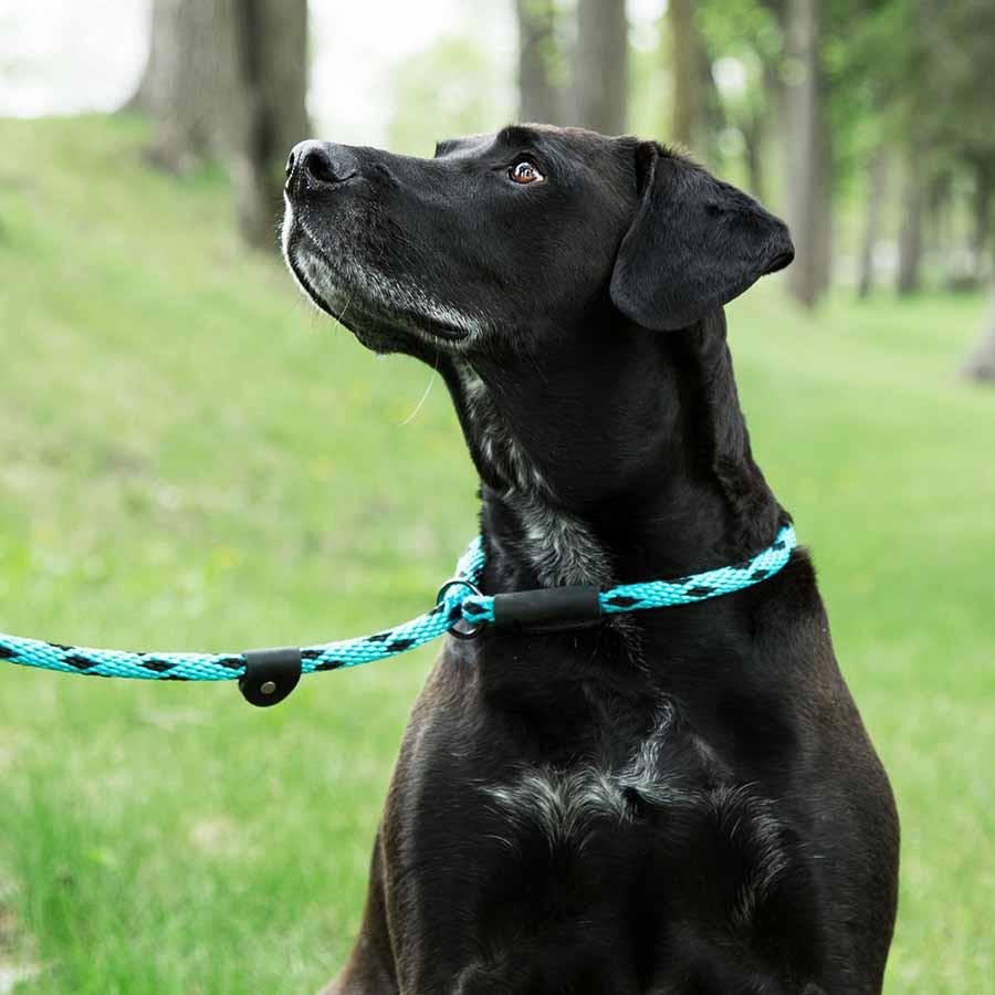 Mendota Braided Slip Lead on Dog