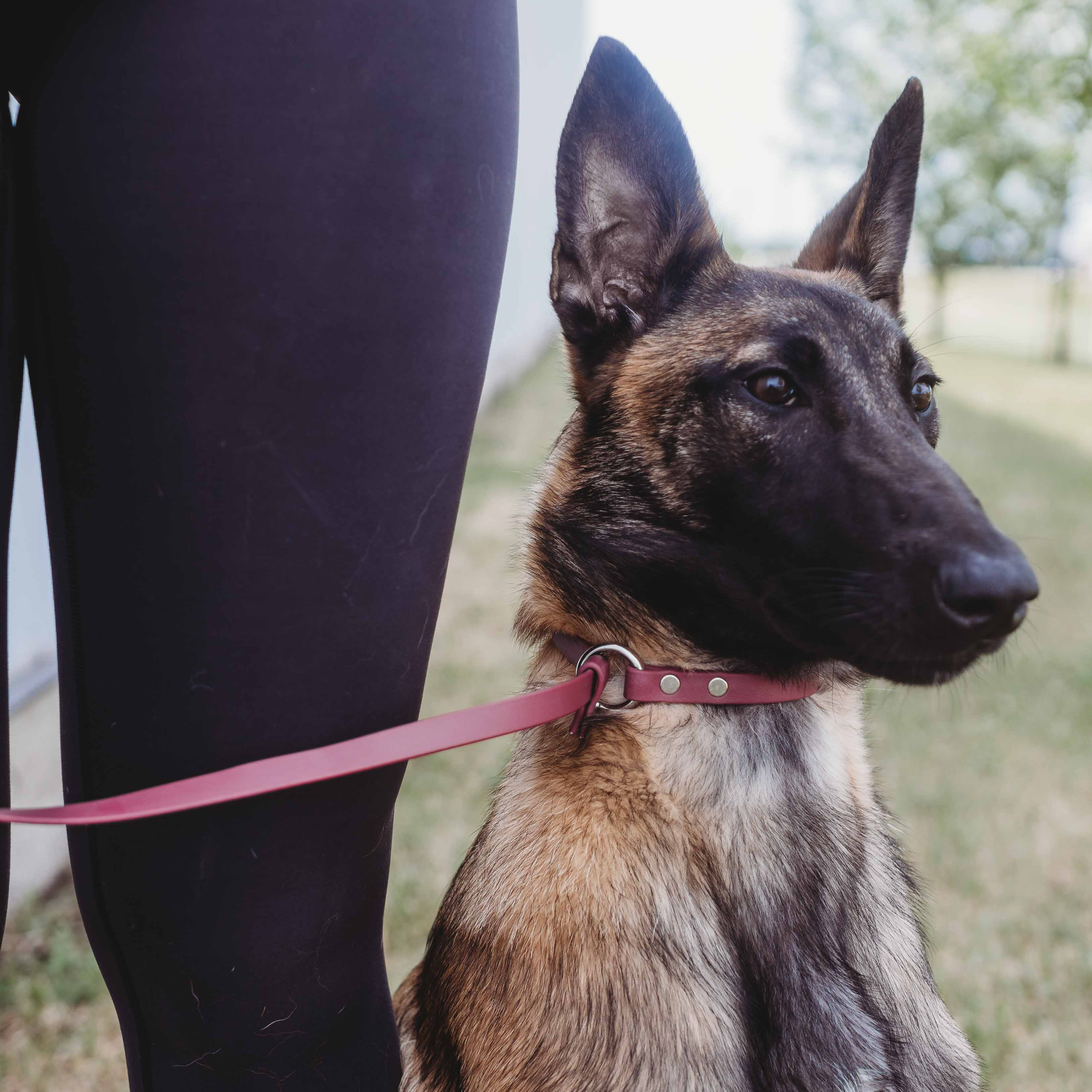 Waterproof Dog Training Pack Slip Leash