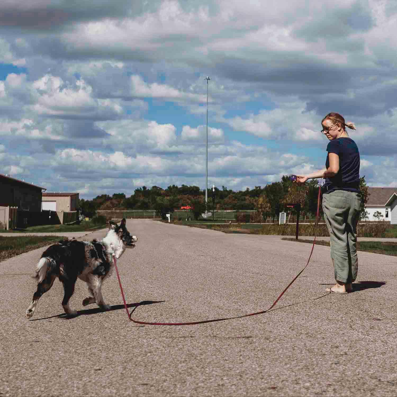 Waterproof Dog Training Pack Long Line