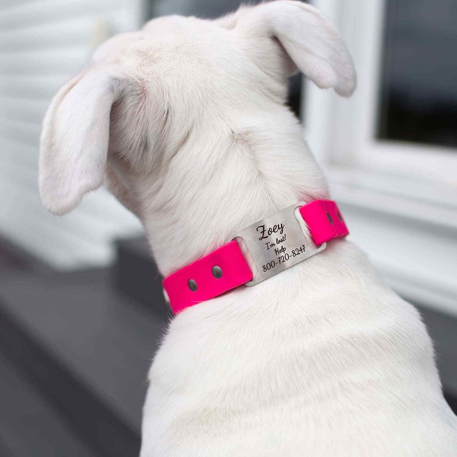 Waterproof Scrufftag on Dog Magenta